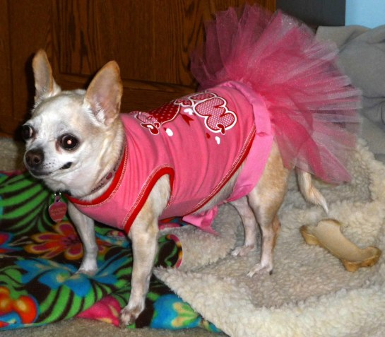 The Diva rockin' her tutu and tshirt!!